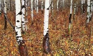 Ζώο κρύβεται στο δάσος - Μόλις το 5% μπορεί να το εντοπίσει! Εσείς; (photos)