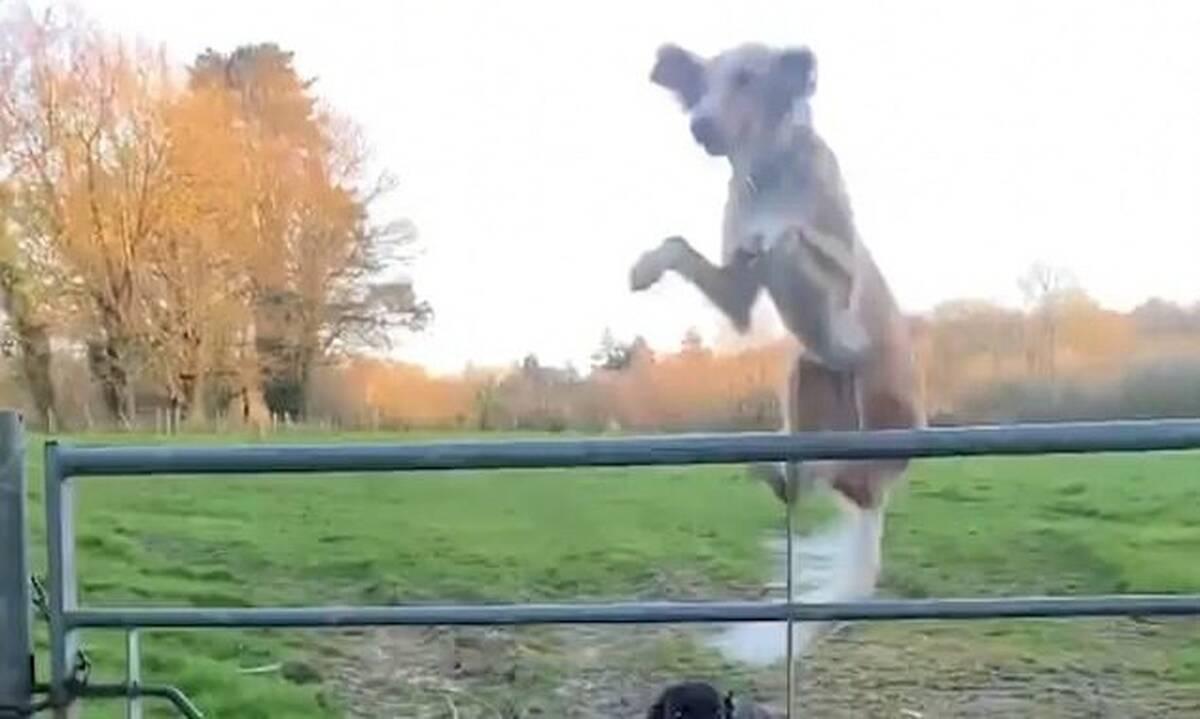 Απολαυστικό! Σκύλος «έσπασε» την... καραντίνα με απίστευτο τρόπο! (photos+video)