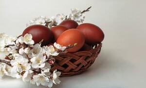 Ήθελαν να τσουγκρίσουν αυγά λόγω Πάσχα αλλά ήταν αποκλεισμένοι - Δείτε πώς τα κατάφεραν (video)