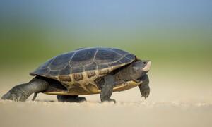 Πήγε να ταΐσει μία χελώνα - Αυτό που ακολούθησε δεν το περίμενε! (video)