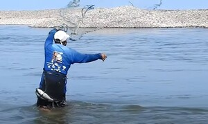 Ψάρεμα: Ψαράς ρίχνει πεζόβολο και... σαρώνει τα κεφαλόπουλα (video)