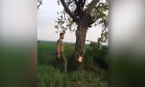 Ανέβηκε σε δέντρο για να κάνει τον Ταρζάν! Η προσγείωσή του ήταν... ανώμαλη (video)