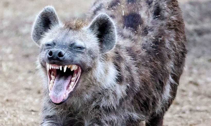 Τα ζώα με το δυνατότερο δάγκωμα στον κόσμο (photos)