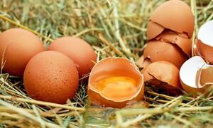 Μικρές κηλίδες στα αυγά - Δεν φαντάζεστε τι είναι (photos)