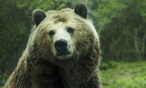 Αρκούδα μπήκε σε σπίτι γιατί της μύρισε πίτσα (video)