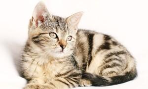 Γάτα επέστρεψε σπίτι με απειλητικό σημείωμα στο κολάρο από γείτονα (photos)