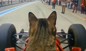 Γάτα έγινε «πιλότος» σε μονοθέσιο της Formula 1 (video)