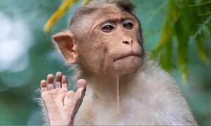 Νεαρός έδειξε το μεσαίο δάχτυλο σε μαϊμού - Το πλήρωσε ακριβά (video)
