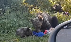 Σταμάτησαν σε πάρκο για πικ νικ - Τους κυνήγησαν αρκούδες (video)