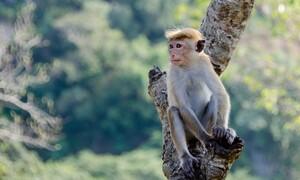 Μαϊμού μπουκάρει σε σούπερ μάρκετ και κλέβει ανενόχλητη ψωμί (video)