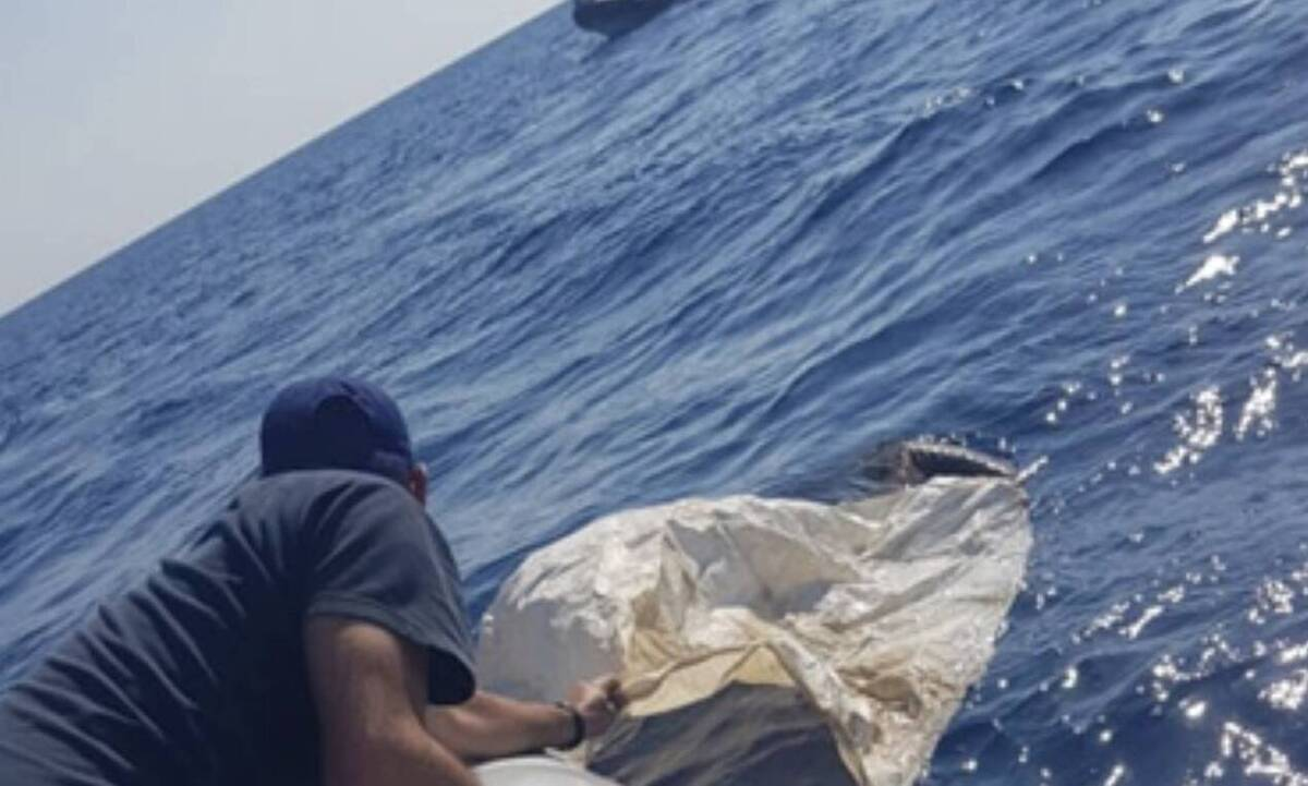 Κρήτη: Έσωσαν τραυματισμένο όρνεο από τη θάλασσα (photos)