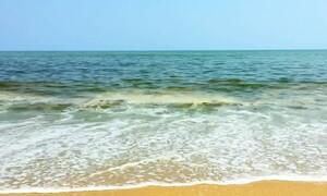 Αν δείτε αυτό τον πράσινο αφρό στην παραλία, μην έρθετε κοντά (video)