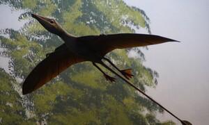 Ανακαλύφθηκε μαζική εξαφάνιση των ειδών στη Γη πριν 233 εκατομμύρια χρόνια
