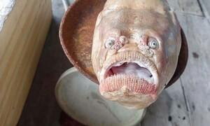 Τρομακτική… ψαριά! Έπιασαν ψάρι με ανθρώπινα μάτια και στόμα (photos+video)