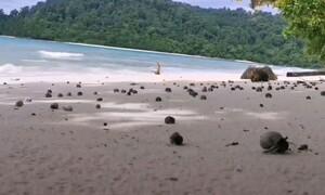 Φοβερό θέαμα: Χιλιάδες καβούρια ερημίτες βγήκαν στην παραλία (video)