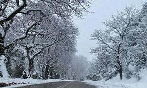 Στενή Ευβοίας: Μαγικό... αλπικό τοπίο. Πυκνή χιονόπτωση... (video)