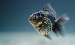 Σάμος: Η ψαριά της ζωής του! Έβγαλε... ένα τέρας (pic)