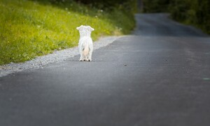 Το βίντεο που θα σας κάνει να κλάψετε - Σκύλος θάβει τον καλύτερό του φίλο