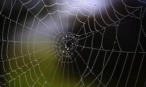 Επιστήμονες μετέτρεψαν τους ιστούς αράχνης σε μουσική (videos)