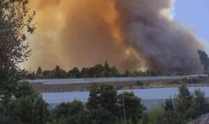 Φωτιά Αχαΐα: Εκτός ελέγχου η πυρκαγιά, εκκενώθηκαν χωριά, καίγονται σπίτια...