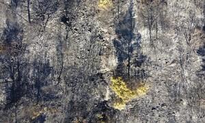 Φωτιά στην Εύβοια: Συγκλονιστική φωτογραφία της πυρκαγιάς από αεροπλάνο