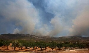 Φωτιά στα Βίλια: Αυτοί είναι οι λόγοι που δεν έχει σβήσει ακόμα
