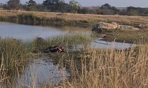Αυτό είναι το πιο επικίνδυνο ζώο στην Αφρική - Επιτίθεται σε λιοντάρια και κροκόδειλους